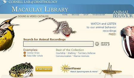 Audio & Video archivio mondiale del Regno Animale